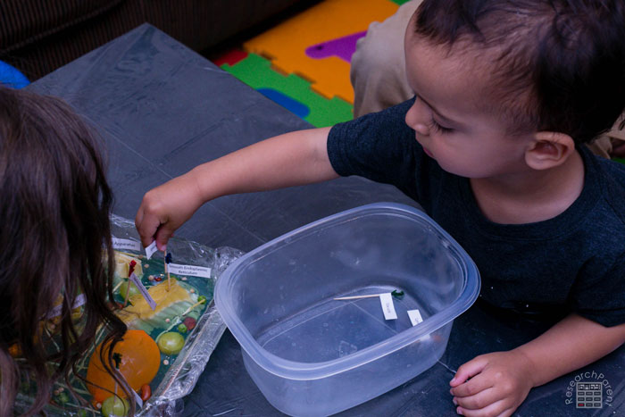 Toddler adding label to plant cell