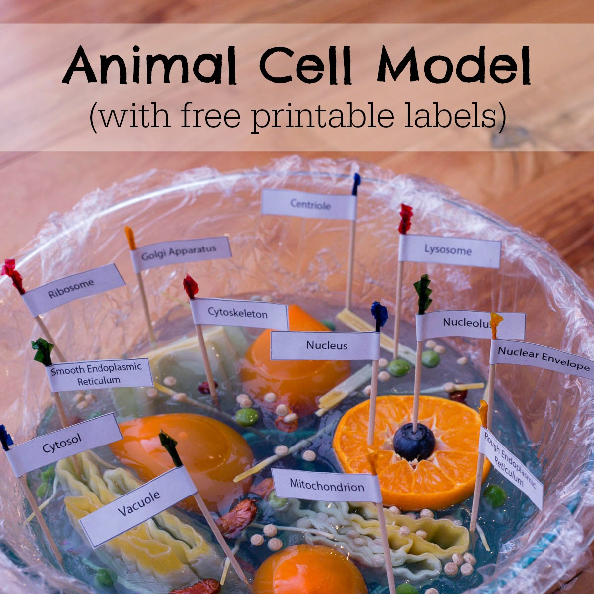 Animal cell model for kids with flags