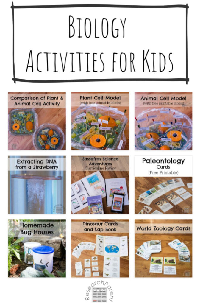 Biology Activities for Kids