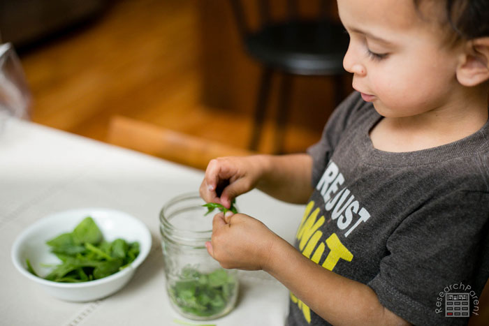 Have Child Rip up Spinach into Small Pieces