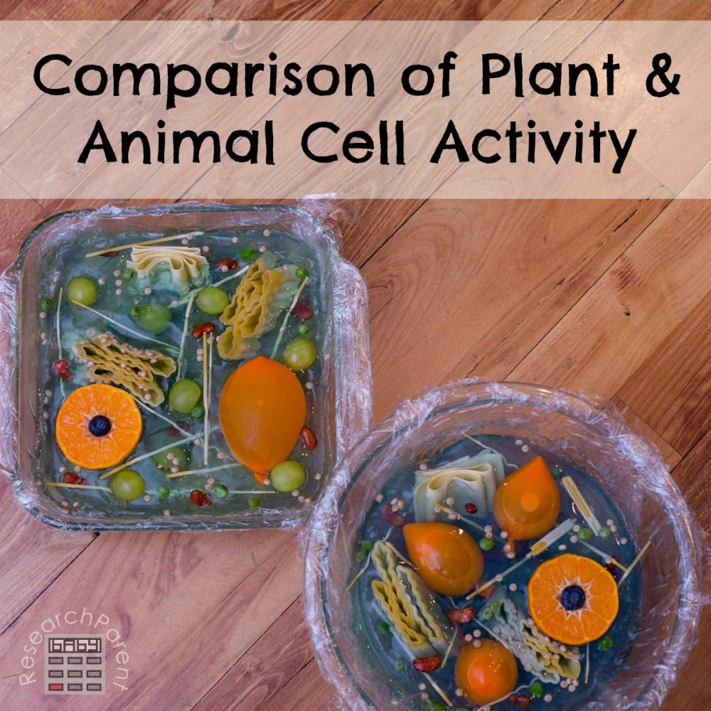 Comparison of Plant and Animal Cell Activity