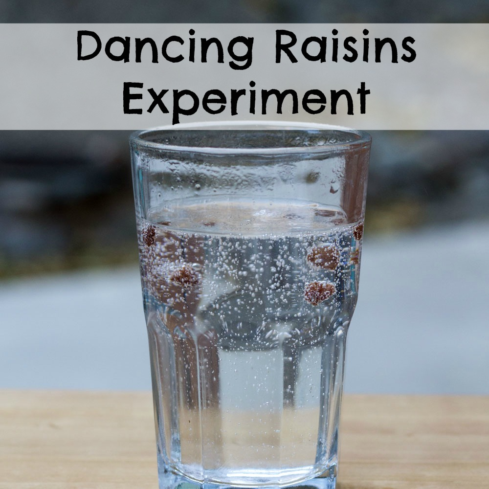 Dancing Raisins Experiment Researchparent Com