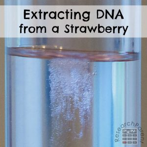 Extracting DNA from a Strawberry