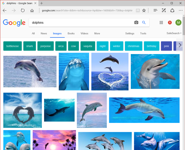 Google Image Search Dolphins