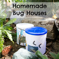 Homemade Bug Houses
