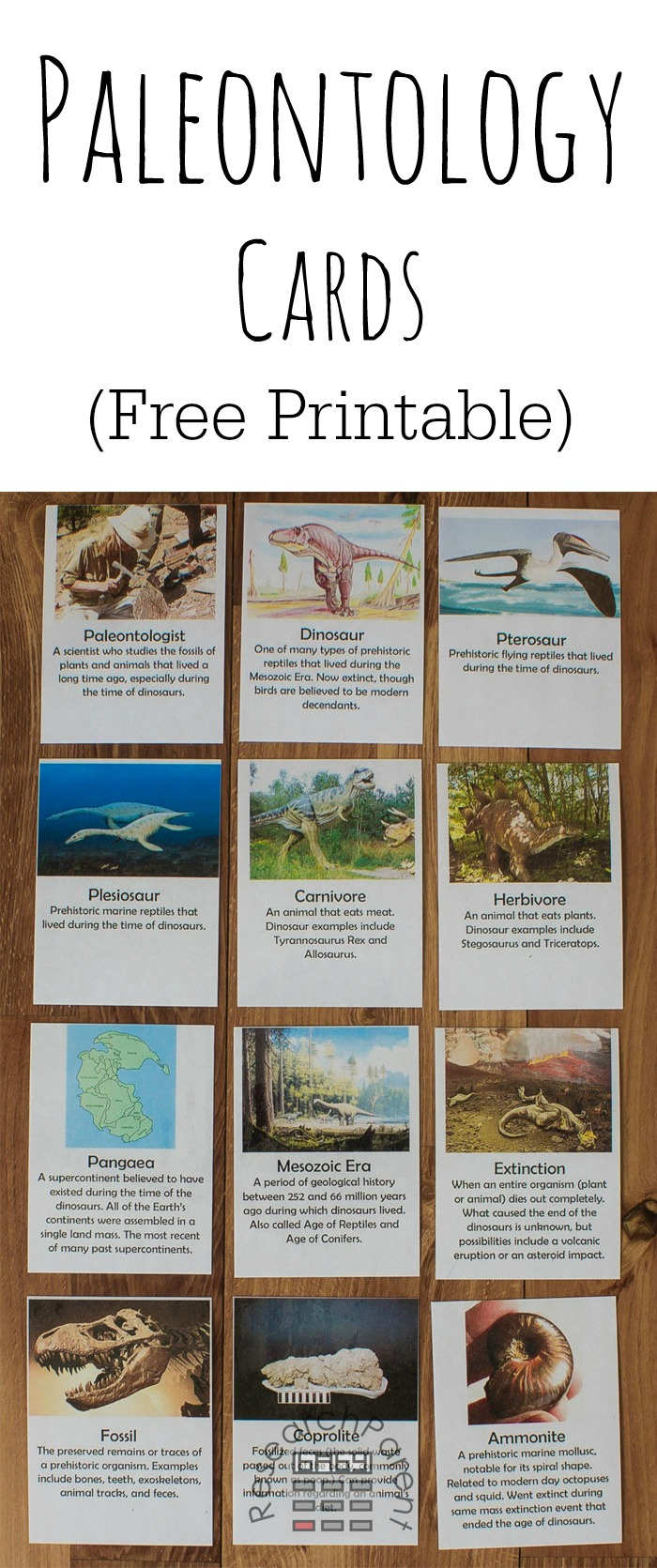 Paleontology Cards Full Set