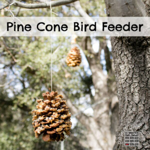 Pine Cone Bird Feeders