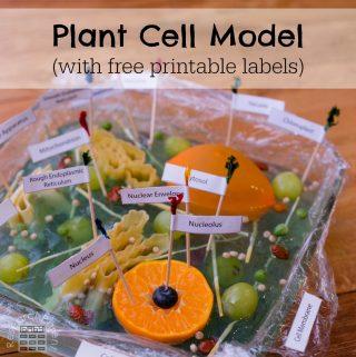 Planet Cell Model for Kids