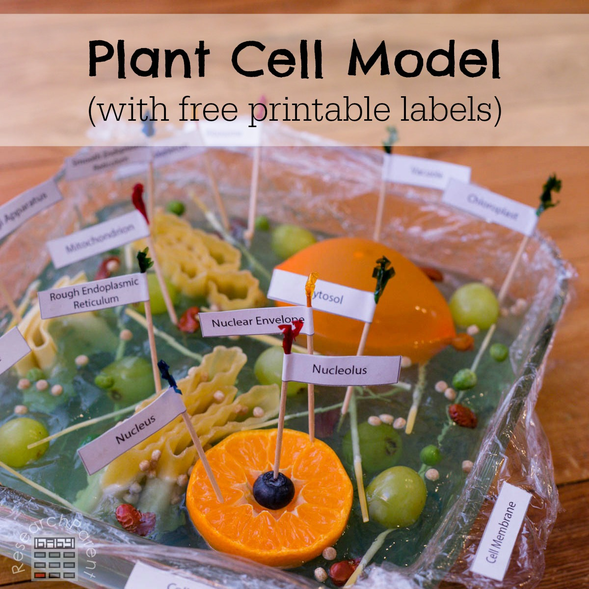 Planet Cell Model for Kids
