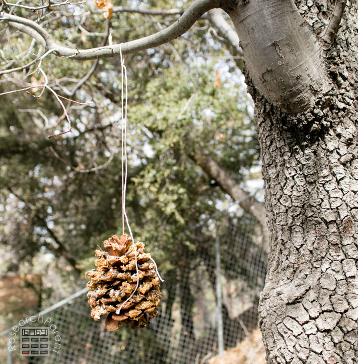 Tie the pine cone to a tree