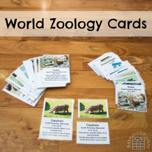 World Zoology Cards